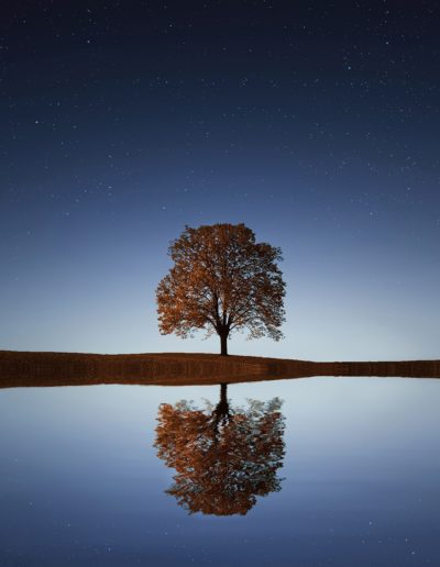Tree and Moon Reflection in Water